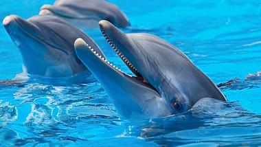 Concluzia oamenilor de ştiinţă: Delfinii se adresează unul altuia pe nume