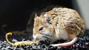 O bancă din Kazahstan a suferit pierderi din cauza unor ... șoareci