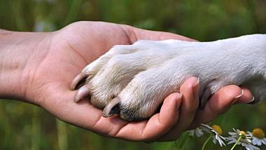 Australia: Campanie de sensibilizare a populaţiei. Un sfert dintre cei care au un câine însoţitor, sunt neglijaţi în localurile publice