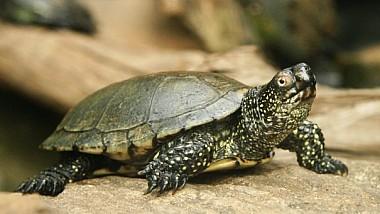 Cursa broaştelor ţestoase -  Competiţie inedită în Gradina Zoologică din statul american Indianapolis