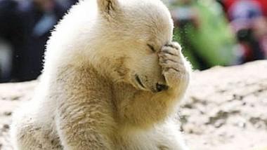 Ultimul urs polar din Coreea de Sud se mută în Marea Britanie