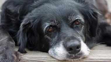 Guvernul a dat undă verde modificărilor la Codul Penal, astfel, tortura animalelor va fi pedepsită cu închisoarea