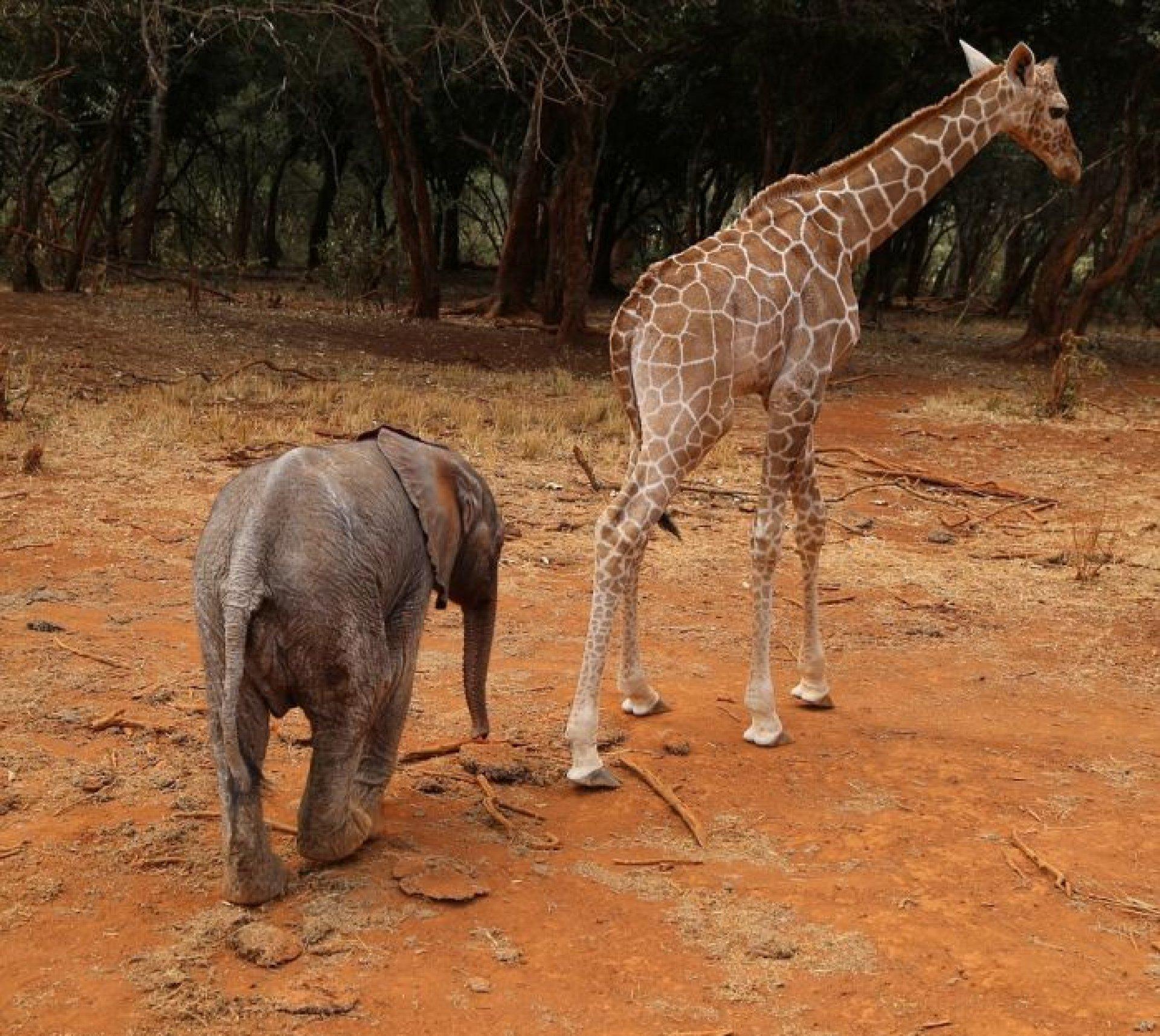 Надписью, картинки со слоником и жирафом