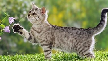 Оклахома: кот в беде не бросит
