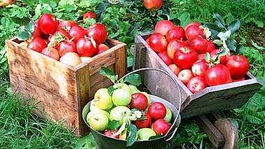 Fructe moldoveneşti în România