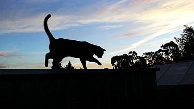 Кот с криминальными замашками