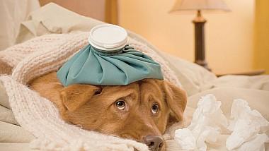 Şi câinii suferă de gripă. Tot mai mulți patrupezi ajung la veterinar cu febră şi tuse