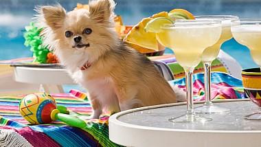 Petreceri scumpe dedicate câinilor