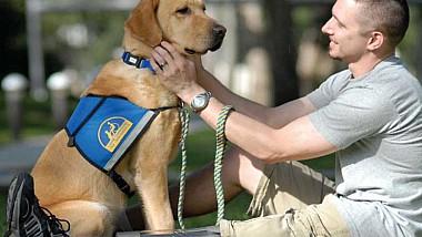 Câinii terapeuţi. Patrupezi din statul american Illinois devin cei mai buni prieteni ai veteranilor de război