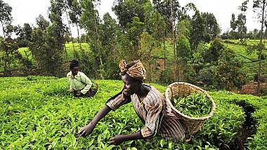 Dintre miliardele de aplicaţii pentru telefoane, una s-a dovedit a fi de mare folos pentru fermierii din Kenia