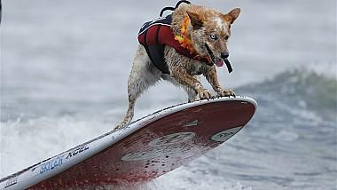 Un câine face senzaţie pe o plajă din California. Skyler se distrează de minune pe placa de surf