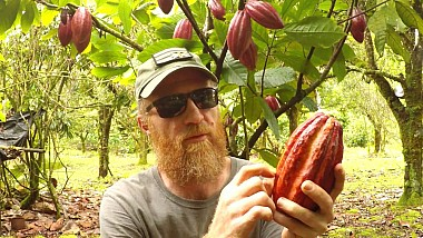 Vor să salveze arborii de cacao