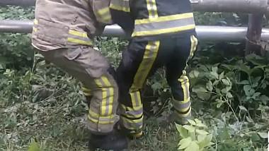 Спасение трёх дворняг, которые угодили в канализационный колодец в столице