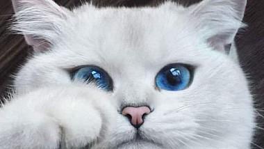 Achilles, pisica prezicătoare pentru Campionatul Mondial de Fotbal din Rusia
