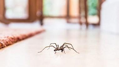 Metoda ingenioasă a unei femei din Marea Britanie de a scoate un păianjen din casă