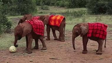 Elefanţii fotbalişti din Thailanda